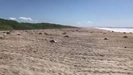 Mexican Police Officer Stands Guard Over Nesting Sea Turtles