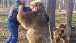 Real Life Bear Hugs - From Real Bears!