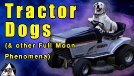 Pets Acting Weird - Funny Tractor Dogs