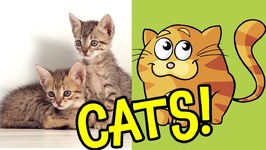 Cats - Ultimate Cat Facts and Interactive Cat Games for Preschoolers and Toddlers 1