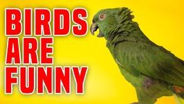 Birds Are Funny - Funniest Bird Compilation
