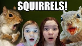 Squirrels Loose in the House