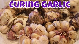 How I Cure And Store Garlic
