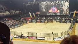 Bull Euthanased After Breaking Leg During Adelaide Rodeo