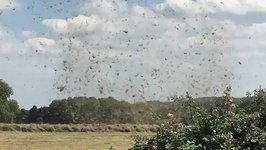 Slowly Whirling 'Hay Tornado' Spotted in Hertfordshire Field
