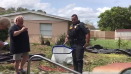 Florida Police Fish Baby Alligator Out of Swimming Pool After Hurricane Irma