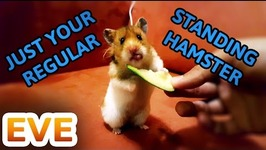 Here's an Adorable Hamster Eating a Lovely Cucumber