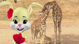 Baby Giraffes Song - Learn Animals Songs