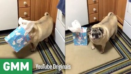 Dogs Opening Gifts - Teach Your Old Dog A New Trick