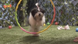 Funniest Jumping Dog Videos