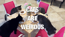 Cats Prove Why They are the Oddest Pets