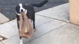 Border Collie Rescue Helps Owner With The Groceries