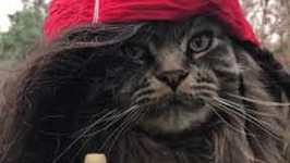 Cat Channels Pirates of the Caribbean With New Hairstyle