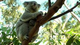 Six-Month-Old Lulu Introduced to Public at Australian Reptile Park