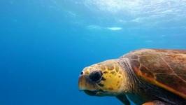 Turtle love - Great Barrier Reef, Australia