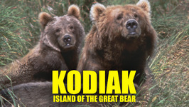 Kodiak: Island of the Great Bear