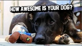 Jetpack Joyride - Flash the Dog