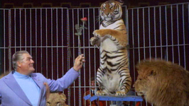 S01 E13 - Siberian Tiger - Animals in Danger
