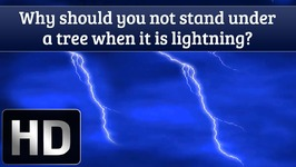 Why Should You Not Stand Under A Tree When It Is lightning