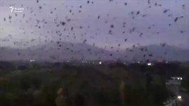 Blizzard of Crows in Tajikistan City Frightens Locals, Looks Like Batman Movie
