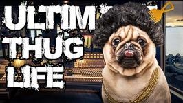 Thug Life - Animals Being Jerks - 9