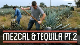 Harvesting Agave (2/3)  How to Brew Everything: Mezcal and Tequila
