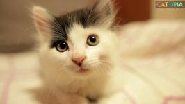 Choo Choo Kitty