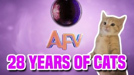 28 Years Of Cats - AFV Premiere - Sunday October 8th