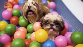 Adorable Puppies Playing Together