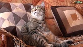 Feline relax time