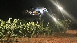 Watch a Night Wine Harvest