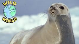 Wild World - Seal - Episode 19