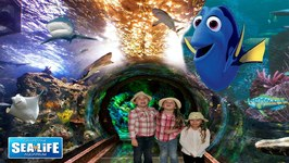 Finding Dory at the Sea Life Aquarium FAMILY FUN FOR EVERYONE