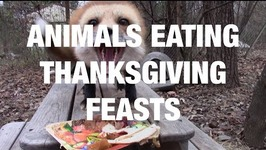 Animals Eating Thanksgiving Feasts