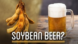 Can You Brew Soy Beans into Beer?