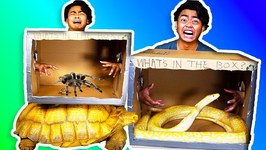 WHAT'S IN THE BOX CHALLENGE - Giant Snake, Tortoise, Scorpions, Lizard