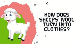 How Does Sheep Wool Turn Into Clothes - Interesting Facts About Sheep
