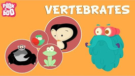Vertebrates - The Dr. Binocs Show - Educational Videos For Kids