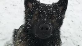 Adorable Dog Experiences the Snow