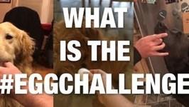 What Is the EggChallenge ?