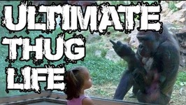 Ultimate Thug Life Compilation - 140 - Zoo Special
