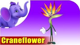 Crane Flower - Flower Song