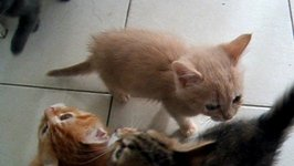Noisy Kittens Have No Patience When It Comes to Dinner Time