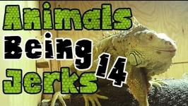 Thug Life - Animals Being Jerks - 14