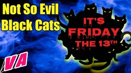 Friday The 13th Superstitions - Black Cats Aren't So Evil
