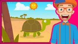 The Tortoise Song - Animals for Toddlers