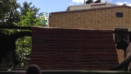 Devious Cat Pushes Tomcat Off Balcony