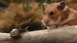 S04 E08 - The General Store - Once Upon a Hamster