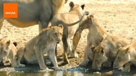 Fun Facts About the Fascinating Lion - Animal Kingdom's Royalty