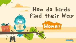 How Do Birds Find Their Way Home? Curious Questions with Answers - Educational Videos
